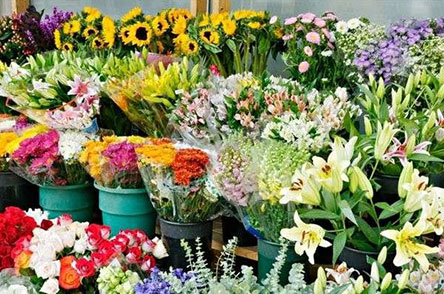 The increase of exports of flower and rose sweat and the reduction of the customers of decorative flowers